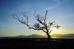 Mangrowe w zmierzchu Obrazy Royalty Free