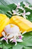 Mangue avec du riz collant Photo stock