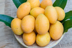 Mangue de prune, ou fruit marial de prune Image libre de droits