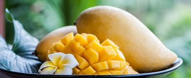 Mangue en conditions naturelles sur un beau fond tropical Image libre de droits
