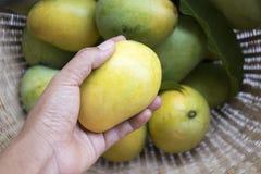 Mangue fraîche Photo libre de droits