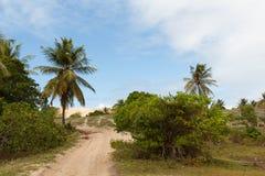 Mangue Seco, Jandaíra, Bahia, Brazil. Sand dunes and palm trees of Mangue Seco, Jandaíra, Bahia, Brazil Royalty Free Stock Image