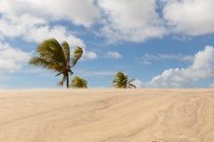 Mangue Seco, Jandaíra, Bahia, Brazil. Sand dunes and palm trees of Mangue Seco, Jandaíra, Bahia, Brazil Royalty Free Stock Photo