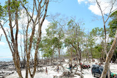 Mangue seco Jungle. Vegetation of the famous Mangue seco near jericoacora Brazil Stock Image