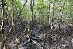 Mangue, tropisch ecosysteem stock afbeelding