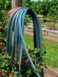 Mangueira de jardim Imagens de Stock Royalty Free