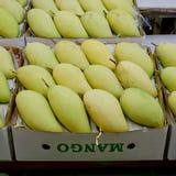 Mangues thaïlandaises sur le marché Mangues de la meilleure qualité de taille Photographie stock