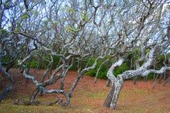 Manguezais Imagem de Stock