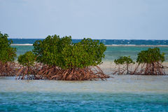 Manguezais em Fiji fotografia de stock