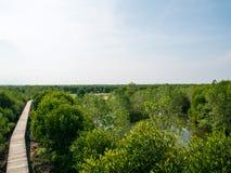 Manguezais Forest View From Above foto de stock