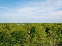 Manguezais Forest View de cima nos manguezais Forest Conservation foto de stock