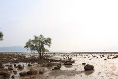 Manguezais na praia, Phuket, Tailândia Imagens de Stock Royalty Free