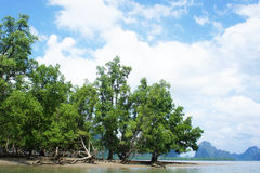Manguezais no sul de Tailândia Imagem de Stock Royalty Free