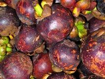 Mangustão Imagem de Stock