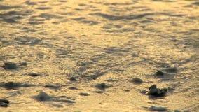 A manhã acena na praia vídeos de arquivo