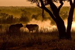 Manhã africana fotografia de stock royalty free