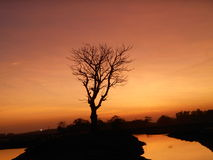 Manhã azul Fotografia de Stock Royalty Free