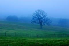Manhã azul e verde Fotografia de Stock Royalty Free