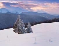 Manhã bonita do inverno Fotos de Stock