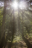Manhã bonita em uma floresta fotos de stock royalty free