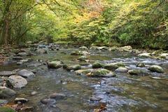Manhã calma da queda por um rio fumarento da montanha Imagens de Stock