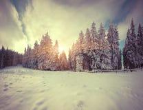 Manhã colorida do inverno na floresta da montanha Foto de Stock Royalty Free