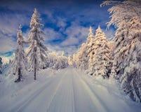Manhã colorida do inverno na floresta da montanha Fotos de Stock Royalty Free