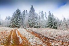 Manhã colorida do inverno na floresta da montanha Fotografia de Stock
