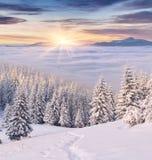 Manhã colorida do inverno nas montanhas Fotos de Stock