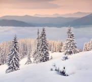 Manhã colorida do inverno nas montanhas Fotografia de Stock Royalty Free