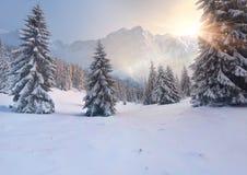 Manhã colorida do inverno nas montanhas Imagem de Stock