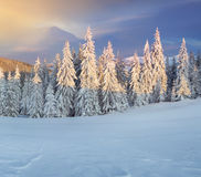 Manhã colorida do inverno nas montanhas. Imagem de Stock Royalty Free