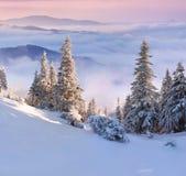 Manhã colorida do inverno nas montanhas Carpathian. Fotografia de Stock Royalty Free
