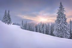 Manhã colorida do inverno nas montanhas Carpathian. Fotos de Stock