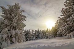 Manhã colorida do inverno nas montanhas no nascer do sol Fotografia de Stock