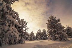 Manhã colorida do inverno nas montanhas no nascer do sol Imagens de Stock