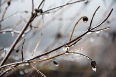 Manhã congelada Foto de Stock