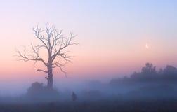 Manhã cor-de-rosa Foto de Stock Royalty Free