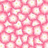 Manhã cor-de-rosa Glory Flower Seamless Background Ilustração do vetor ilustração royalty free