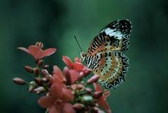 Manhã da borboleta Imagem de Stock