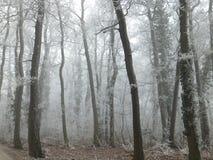 Manhã da floresta janeiro, árvores que desaparecem na névoa foto de stock