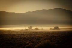 Manhã da montanha de Nevada Foto de Stock