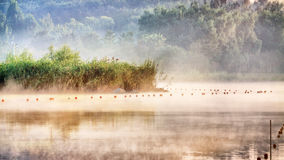 Manhã da névoa no Pequim Forest Park olímpico Fotos de Stock Royalty Free