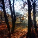 Manhã da natureza Fotos de Stock Royalty Free