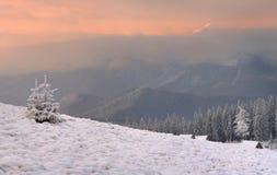 Manhã da primeira neve Foto de Stock Royalty Free
