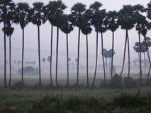 Manhã das palmeiras Imagens de Stock Royalty Free