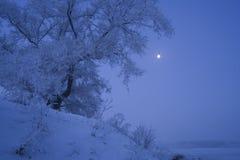 Manhã de congelação Fotografia de Stock Royalty Free
