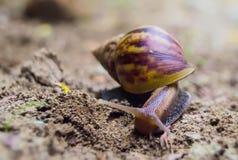 Manhã do caracol na primavera que rasteja na terra imagens de stock