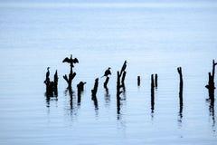 A manhã do começo de uma vida nova dos animais que vivem neste mar lá é uma variedade de ecossistemas e modos de vida no thi fotos de stock