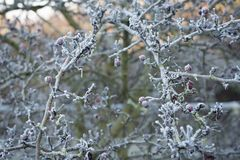 Manhã do inverno Fotos de Stock Royalty Free